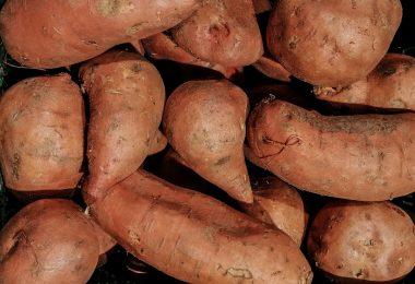 plantation patate douce
